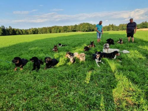 Hundewandertag Juli 2020